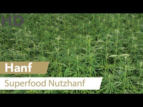 Hanf // Nutzhanf, Superfood, Heilpflanze, Gesundheit