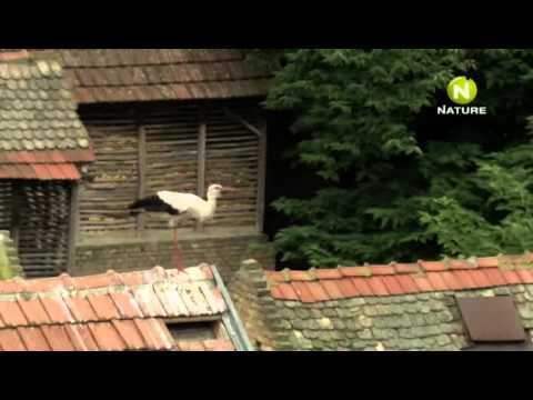 Дикая природа Сербии 2011