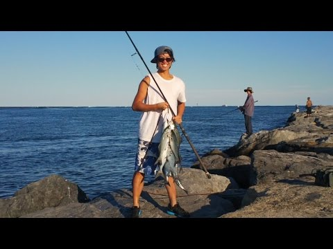Category fish of the atlantic ocean for Where to buy fish mox locally