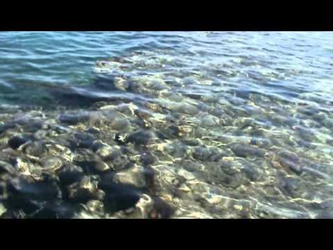 Поездка в Египет Шарм эль Шейх Sierra январь 2012 часть 1