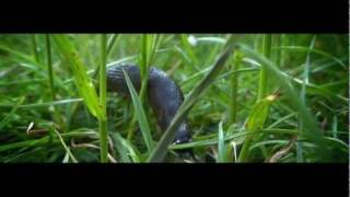 Sony HX9V  (macro mode) The  Slug - 1080p