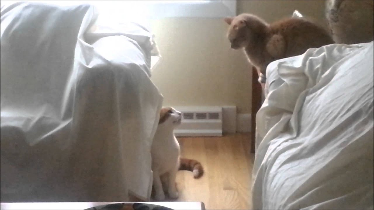 tame feral kittens