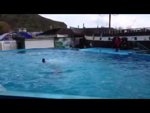Галустян и дельфины