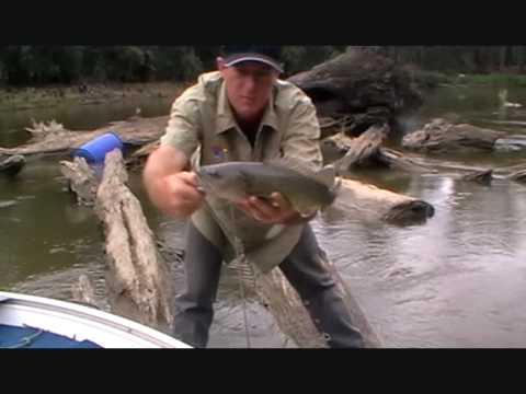 MURRAY COD,TROUT COD .LURE FISHING
