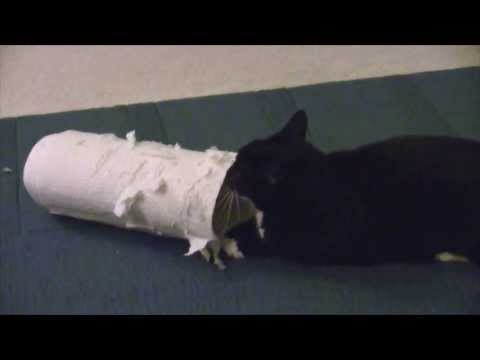 Polydactyl Super Cat Vs Paper Towel Roll (featuring Ukulele Instrumental by Kara Square)