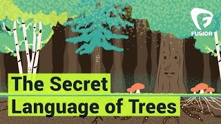 Trees can talk to each other. Seriously.