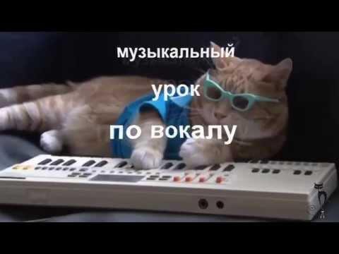 Новый  смешной видео прикол про котов. Урок музыки