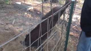 Getting rid of unwanted hogs