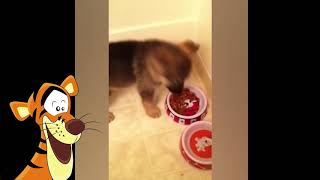 This is why  GERMAN SHEPHERDS are the FUNNIEST  DOGS    Funny DOG  compilation