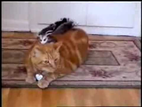 Funny Cat Videos For Babies
