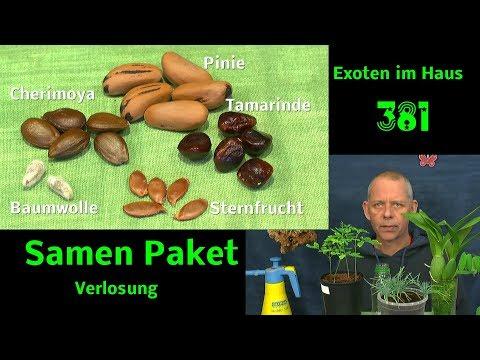 Exotische Pflanzen heran ziehen und Verlosung eines Samen Paketes