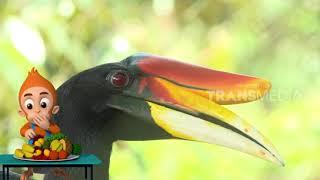 Eksperimen Sifat Burung Rangkong Badak Dan Kangkarong Hitam   Si Otan (09/01/19) Part 2
