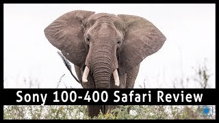 Sony FE 100-400 Review - African Safari