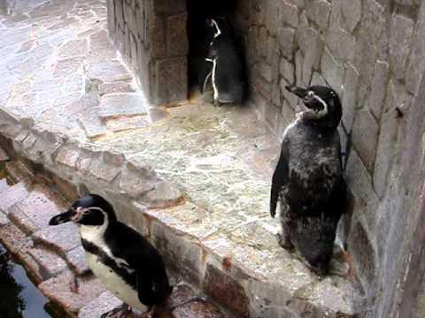 江戸川区自然動物園 フンボルトペンギン ちくわ の換羽