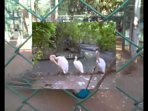 Photos from VOC Park and Zoo in Coimbatore