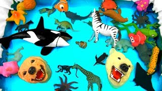 Learn Colors With Wild Animals and Zoo Animals in Blue Water | Animal Toys For Kids