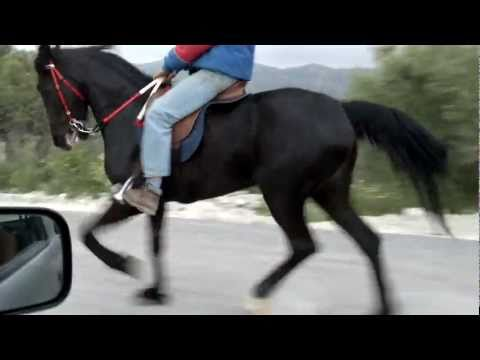 aravani horse-αραβανι αλογο