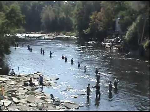 Salmon river pulaski ny with music by jerry cali youtube for Salmon fishing pulaski ny
