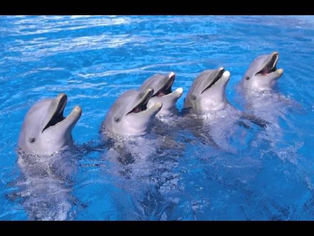 Los increíbles delfines