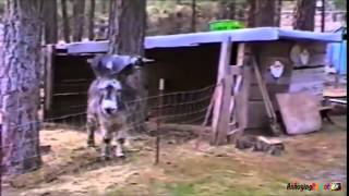 Funny Joke Dirty Funny Physics Jokes Funny Com Video Funny Videos For