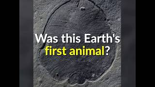 The First Animals