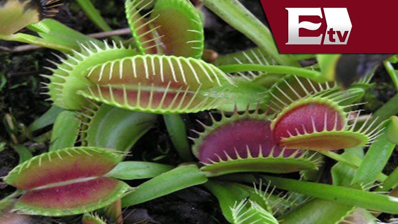 Plantas carn voras de que se alimentan mariana h y for Como se llaman las plantas ornamentales