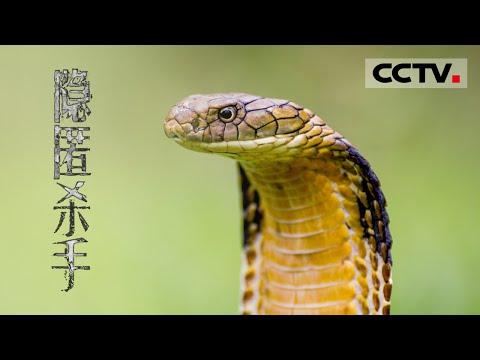 中國-自然世界