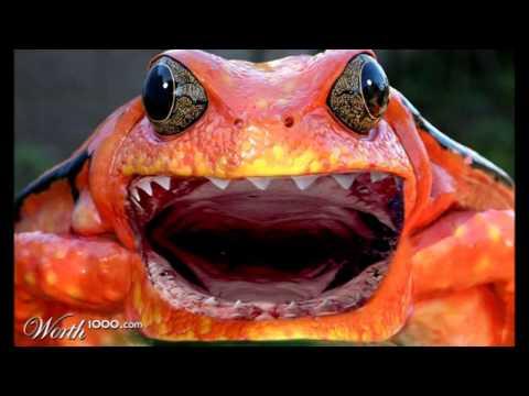 Crazy Frog - Axel F (metal Version) video