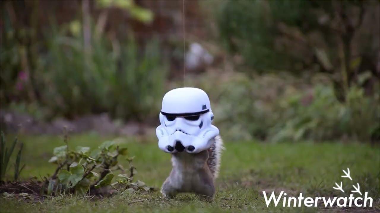 Squirrel strikes back - Winterwatch: 2016 - BBC Two