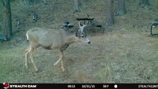 31oct 7V Turkeys and Deer