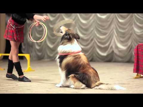 Студия  Арктур Интерактивное шоу  с дрессированными собаками Дух Шотландии