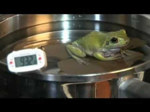 Boiling Frog Syndrome - Have You Become a Boiled Frog?
