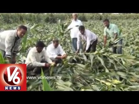 Heavy Rains and Hail Storms Destroyed the Crops across the State