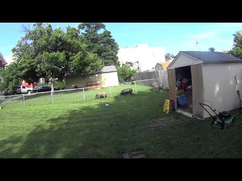Fox Archery Bow.Rabbit Hunting Practice  Sony Action Cam
