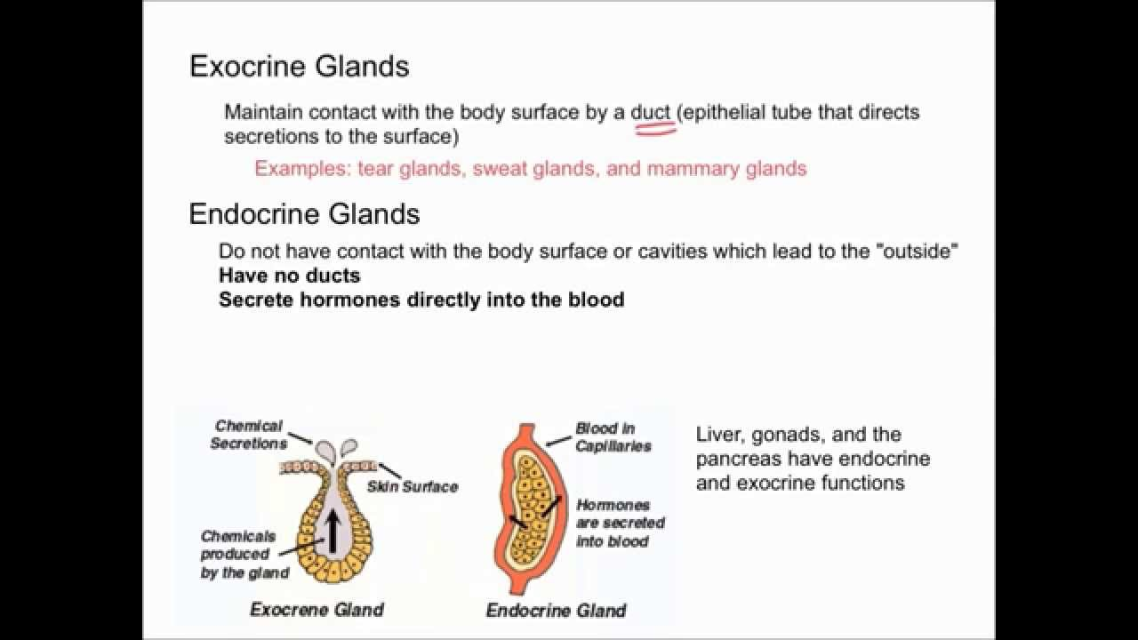which endocrine gland secretes steroid hormones in response to stress