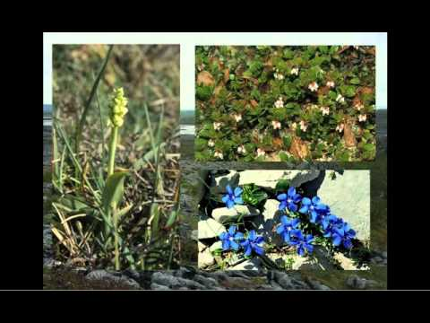 Shoots and Leaves: Changes in the plants, vegetation and natural habitats of Ireland