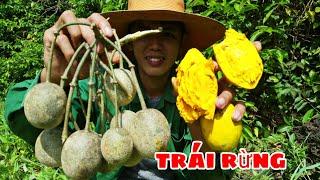 Thử Thách Vào Rừng Tìm Trái Cây | Ăn Thử Trái Cây Lạ Trong Rừng Của Sang tv