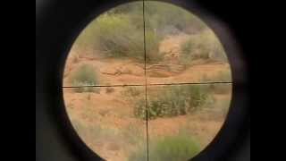 Benjamin Marauder .25 hunting (graphic)