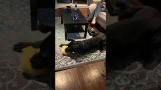 Adopt Ace on Adopt-a-Pet.com