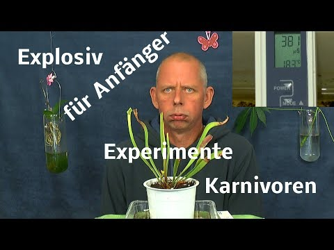 Karnivoren entdecke die fleischfressenden Pflanzen