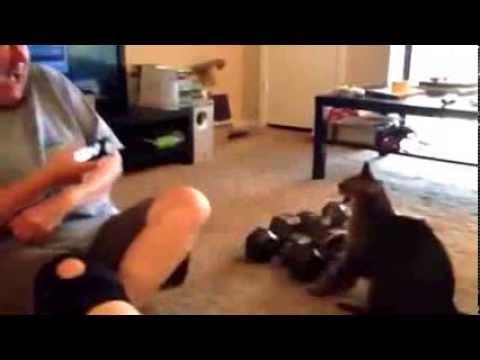 como hacer que te entienda tu gato como este traductor