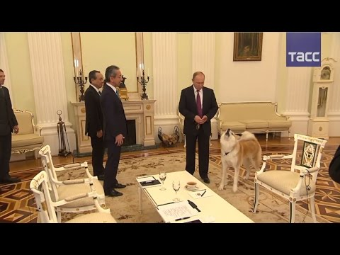 Путин, его собака и японские журналисты – ВИДЕО