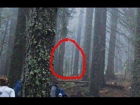 Actual Pictures of Aliens of Actual Alien Encounters