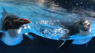 Underwater World Langkawi Adorable Penguins