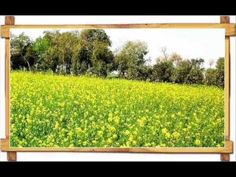 Punjab Kihnu Kehnday Ne - Manmohan Waris - Punjabi Virsa 2005 video