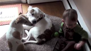 Baby Sophies Conversation with Dog Shokie: Cute Dogs And Adorable Babies compilation