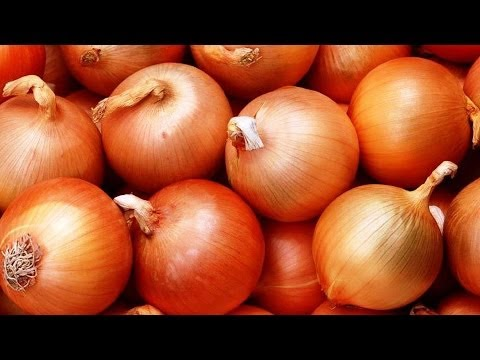 Лук севок – лучшие сорта и виды для посадки