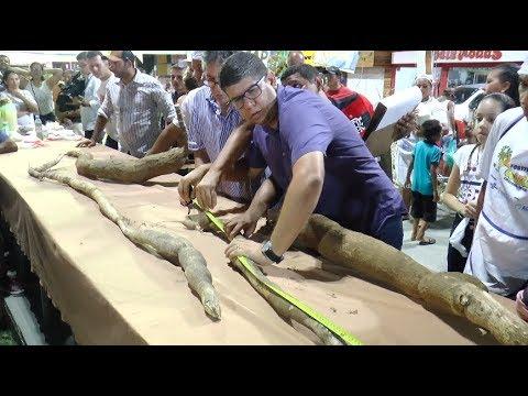 Prefeitura entrega premiações a produtores rurais durante o Festival da Farinha