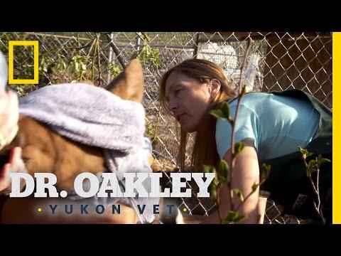 Moose Gotta Go   Dr. Oakley, Yukon Vet