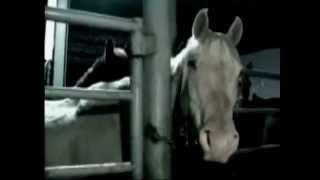 horses don t deserve slaughter